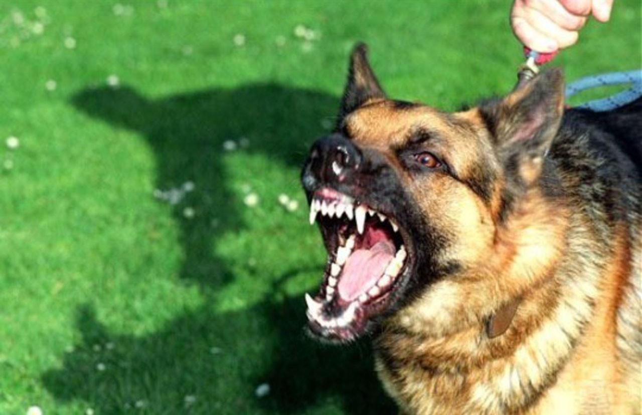 «Собака бывает кусачей только от жизни собачьей»