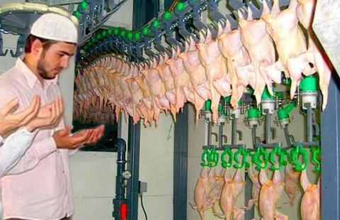 Какую курицу мы кушаем? Вопрос халяля открыт