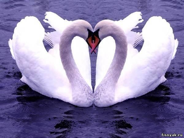 Замуж по любви или по расчету?