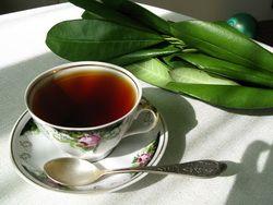 """Ученые объяснили пользу """"кофейного чая"""""""