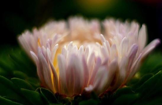 Image result for фото цветы благодарности